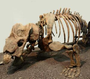 palaeontology1