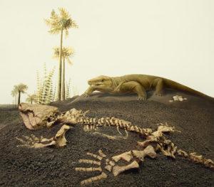palaeontology3
