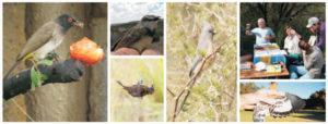 Bird Banding_2019