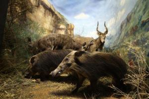 Mammals Gallery 2