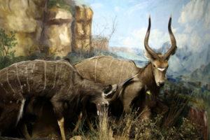 Mammals Gallery 3