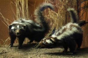 Mammals Gallery 4