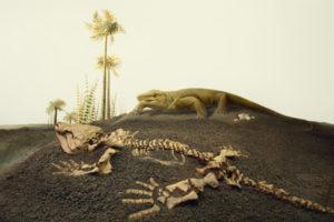 Palaeontology Gallery 1
