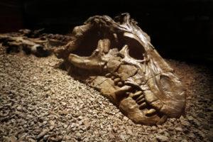 Palaeontology Gallery 2