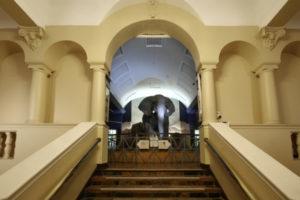 Mammals Gallery 1