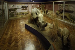 Mammals-banner