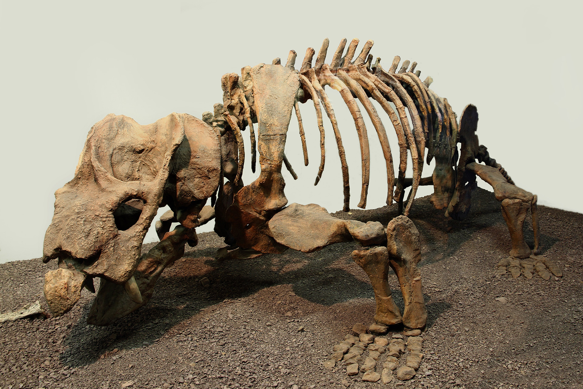 Palaeontology-banner