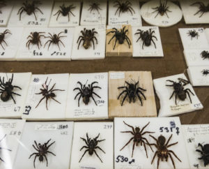 Arachnology