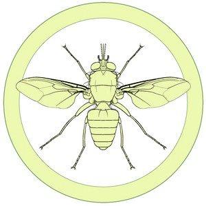 Manual of Afrotropical Diptera