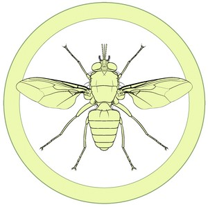 Manual of Afrotropical Diptera