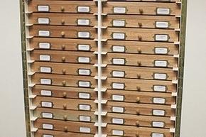 Re-storage Entomology cupboard