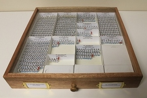 Re-storage Entomology tray
